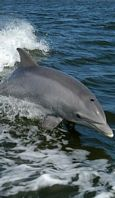 dolphins poisoned